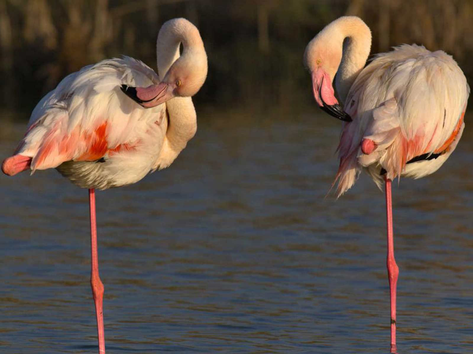 Flamingo Apartaments Appartamento